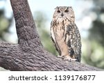 Stock photo owl with funny owl eyes on the tree 1139176877