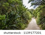 a tropical unpaved road with... | Shutterstock . vector #1139177201
