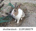 cute small rabbits | Shutterstock . vector #1139188379