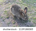 cute small rabbits | Shutterstock . vector #1139188385