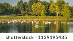 swans and ducks the white... | Shutterstock . vector #1139195435