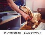 small yellow dog sleeping... | Shutterstock . vector #1139199914