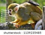 cute green monkeys are... | Shutterstock . vector #1139235485