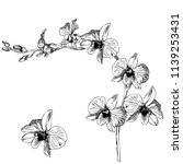 hand drawn pen and ink orchid... | Shutterstock .eps vector #1139253431
