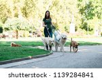 Stock photo dog walker with dogs enjoying in park 1139284841