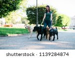 Stock photo dog walker enjoying with dogs while walking outdoors 1139284874