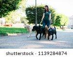 Stock photo dog walker enjoying with dogs while walking outdoors 1139284874