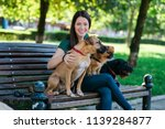 Stock photo dog walker sitting on bench and enjoying in park with dogs 1139284877