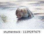 a cute monkey lives in a... | Shutterstock . vector #1139297675