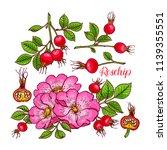 beautiful set of dogrose... | Shutterstock .eps vector #1139355551