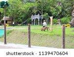 safari marine park  bali  ... | Shutterstock . vector #1139470604