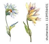 white daisy flower. floral... | Shutterstock . vector #1139556431