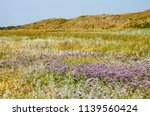 field with sea lavender and... | Shutterstock . vector #1139560424