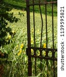 old rusty iron gate giving... | Shutterstock . vector #1139595821