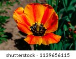 orange beautiful and bright... | Shutterstock . vector #1139656115