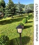 green area with fir trees | Shutterstock . vector #1139687717