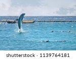 dolphin jumping out of the sea... | Shutterstock . vector #1139764181