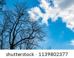 the trees on background of the... | Shutterstock . vector #1139802377