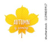 autumn is coming text on maple... | Shutterstock .eps vector #1139805917