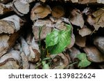 pile of firewood backgrounds... | Shutterstock . vector #1139822624
