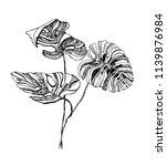 monstera leaves illustration.... | Shutterstock .eps vector #1139876984
