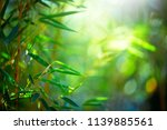 bamboo. bamboos forest. growing ... | Shutterstock . vector #1139885561