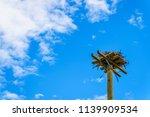 Osprey Or Fish Hawk Nest Made...