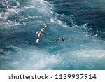 antarctica birds flying against ... | Shutterstock . vector #1139937914