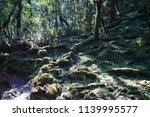 growing moss on trees | Shutterstock . vector #1139995577