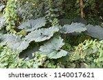 natural woodland for background  | Shutterstock . vector #1140017621