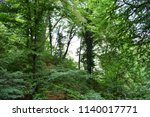 natural woodland for background  | Shutterstock . vector #1140017771