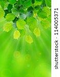 green leaves in the sun  macro... | Shutterstock . vector #114005371