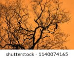 beautiful tree and orange sky... | Shutterstock . vector #1140074165