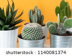 Collection Of Various Cactus...