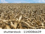 closeup of a large field of... | Shutterstock . vector #1140086639