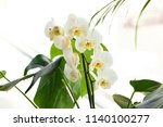 beautiful white orchid flowers...   Shutterstock . vector #1140100277