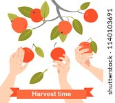 hands are picking apples in the ... | Shutterstock .eps vector #1140103691