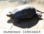 small turtle in grass outdoor.... | Shutterstock . vector #1140116615