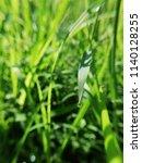 waterdrops   on green  grass. ... | Shutterstock . vector #1140128255