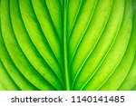 green leaf as background | Shutterstock . vector #1140141485