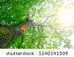 forest trees. nature green wood ... | Shutterstock . vector #1140141509