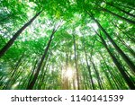 forest trees. nature green wood ... | Shutterstock . vector #1140141539