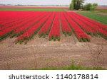 tulip field in holland. red... | Shutterstock . vector #1140178814