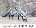 afrcican civet  civettictis... | Shutterstock . vector #1140221267