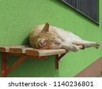 orange domestic tabby cat... | Shutterstock . vector #1140236801