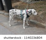 dalmatian dog   domestic dog... | Shutterstock . vector #1140236804