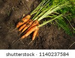 a pile of fresh beautiful... | Shutterstock . vector #1140237584