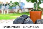 small cactus plant  | Shutterstock . vector #1140246221