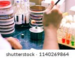 microbiological inoculation...   Shutterstock . vector #1140269864