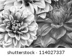 Monochrome Bouquet Of Dahlia...